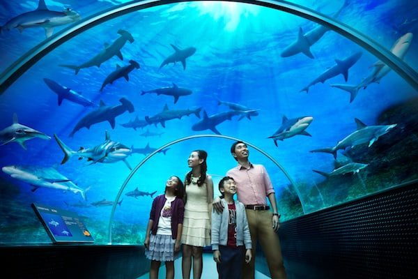 shark-seas-at-sea-aquarium-singapore-karryon