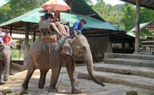 Here's another reason to banish elephant rides from your travel itinerary