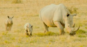 AFRICAN ANIMAL TRIVIA: 5 facts that will have you scratching your head in the savannah
