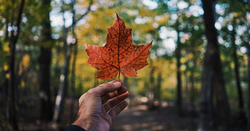 RENDEZ VOUS: Why sustainability is a key part of Canada's DNA