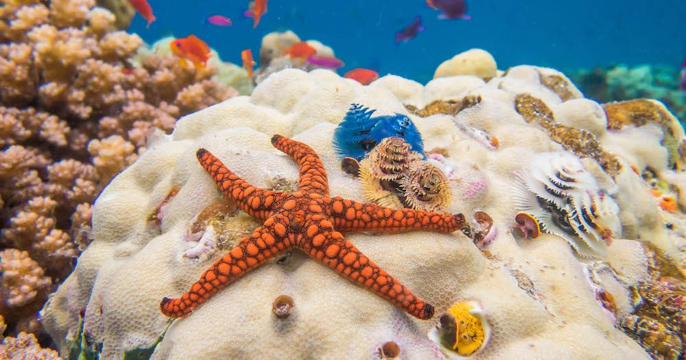 Love Fiji? Love The Ocean? Check Out This Mer-Mazing Coral Reef Ecology Course