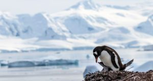 Adventure calling? Hurtigruten has launched epic 93 and 66-day Pole-to-Pole expeditions
